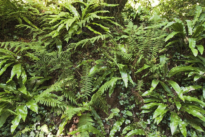 Selection of ferns