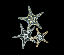 Starfish, coloured X-ray