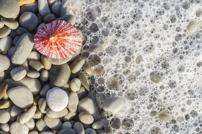 Limpet shell and pebbles on a beach