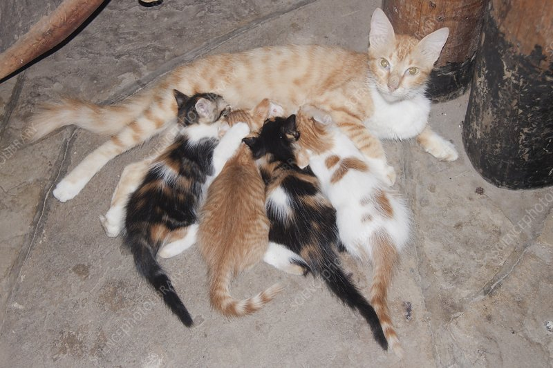 Litter of kittens with mother