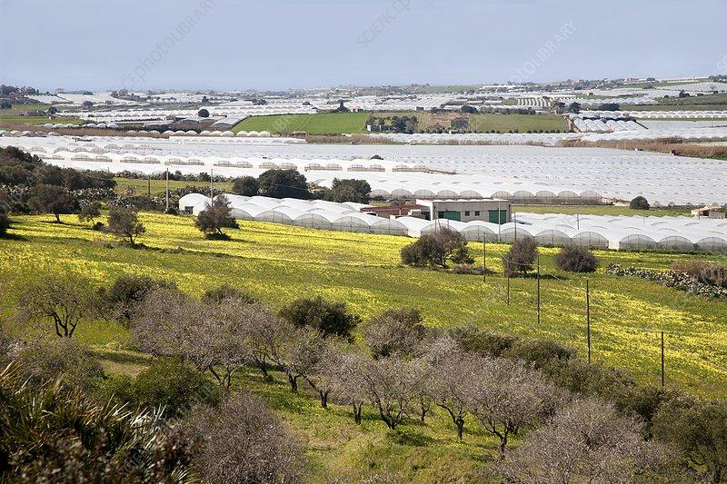 Sicily polytunnels