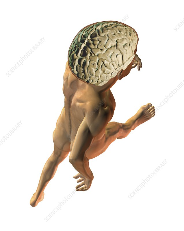 Human brain on walking man, artwork