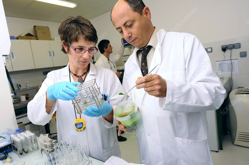 Research review paper biodiesel from microalgae
