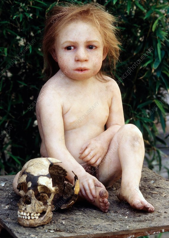 Neanderthal child and fossil skull