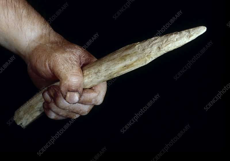 Neanderthal weapon