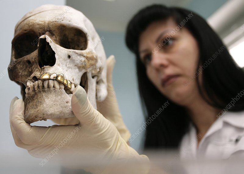 Forensic scientist with human skull