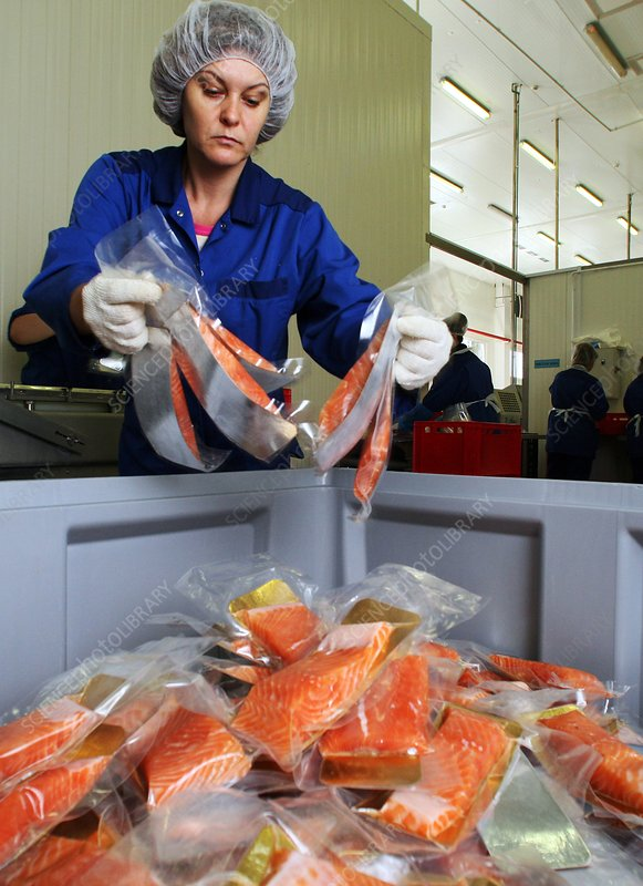 Packaged salmon fillets at factory