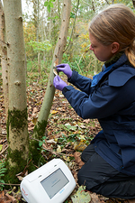 Ash dieback disease research