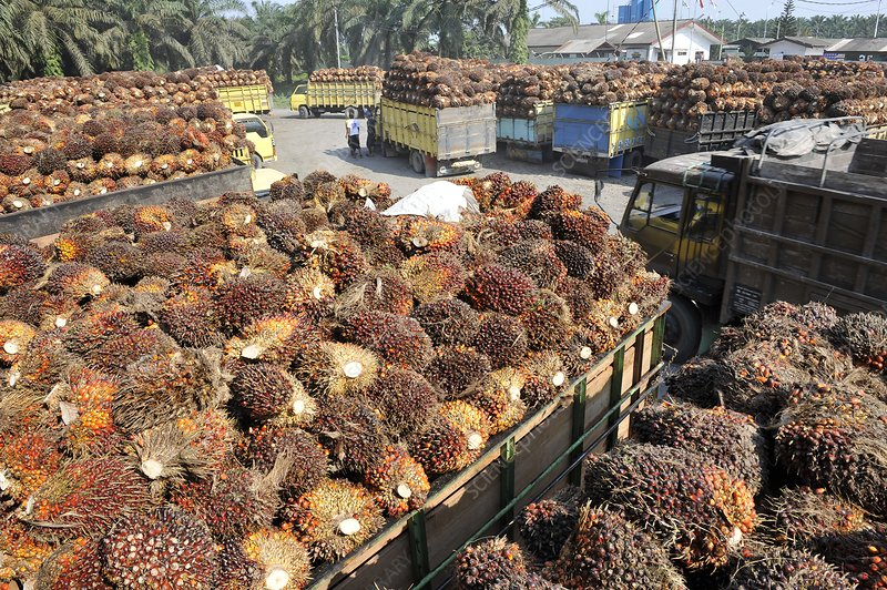 Palm oil factory, Indonesia
