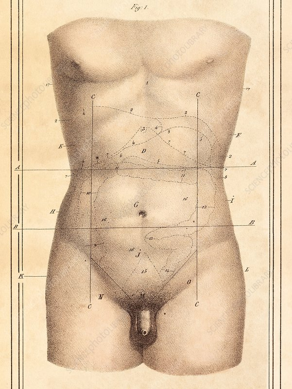 Abdominal anatomy, 1825 artwork