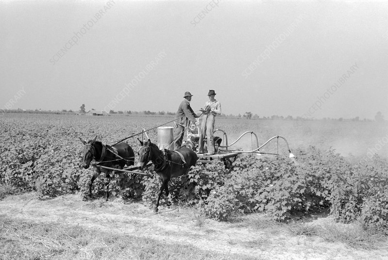 Spraying cotton against pests, 1938