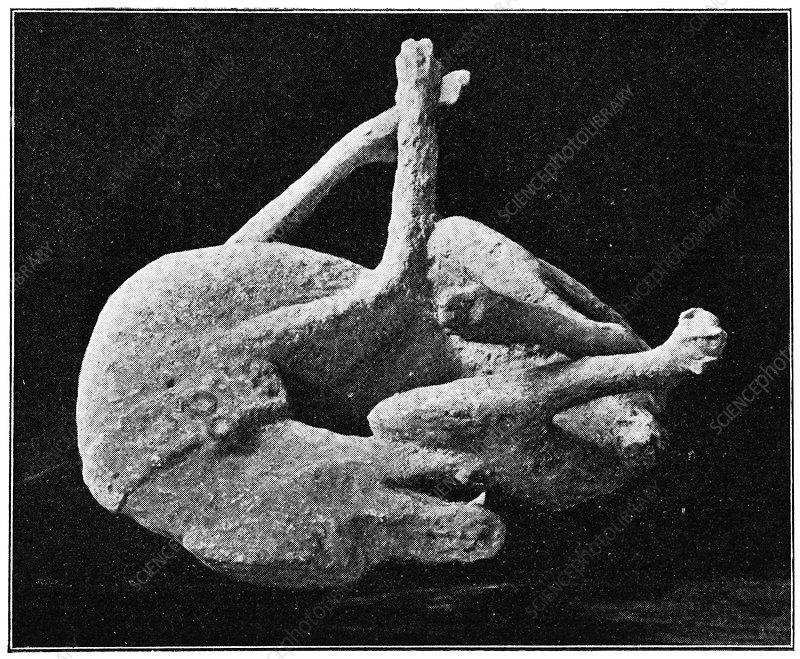 Plaster cast of dog from Pompeii, artwork