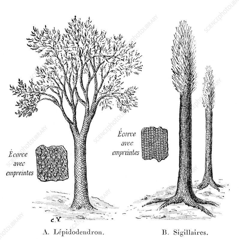Lycopod prehistoric plants, artwork