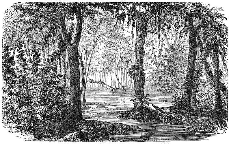Carboniferous swamp, artwork