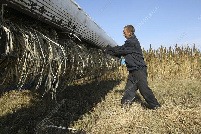 Worker with combine harvester