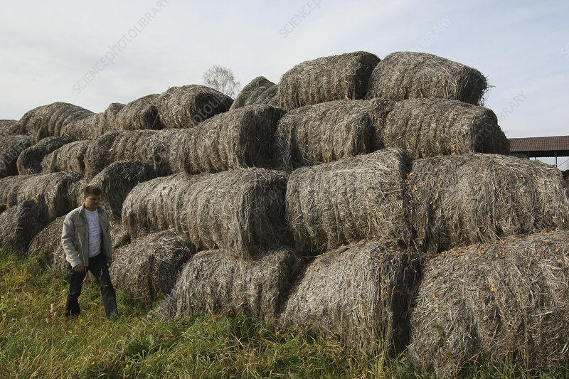 Worker with bales of hemp