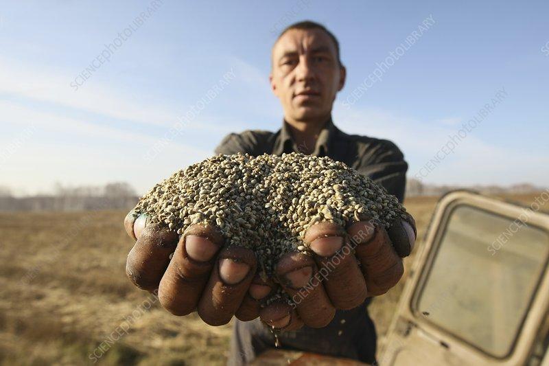 Farmer with hemp seeds