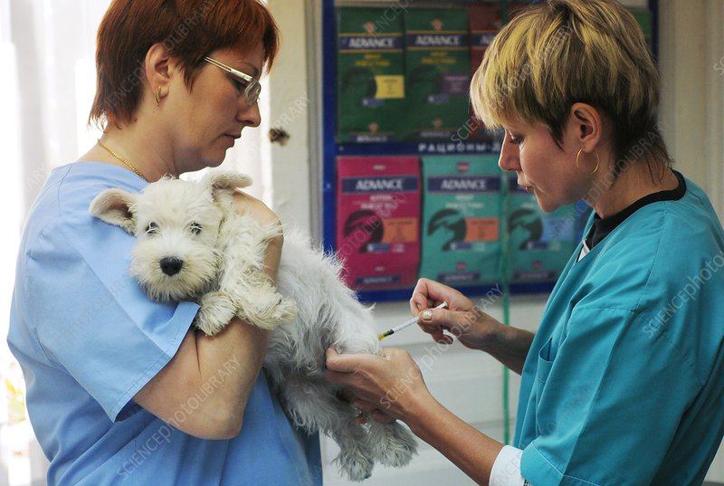 Puppy having an injection