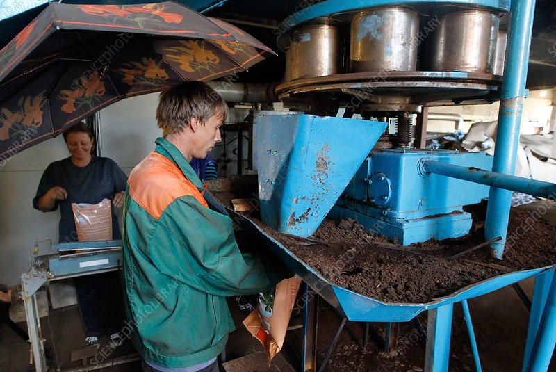 Workers bagging peat at factory