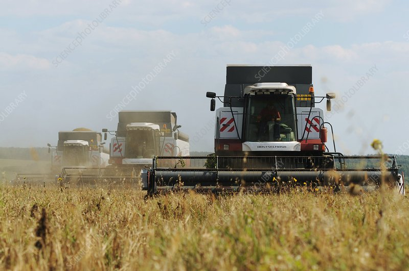 Combine harvesters in a field