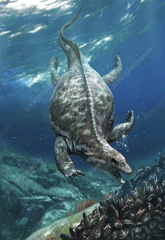 Prehistoric marine reptile, Placodus