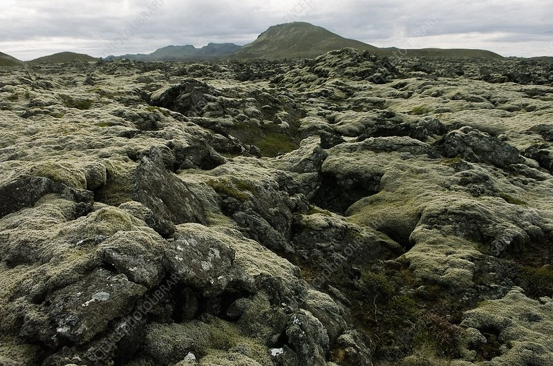 Mossy lava field, Iceland