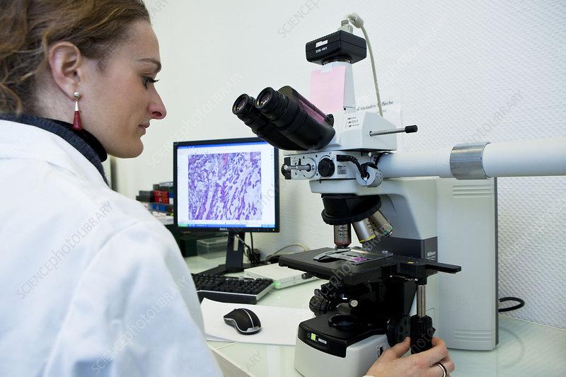 histology - stock image c015  2152