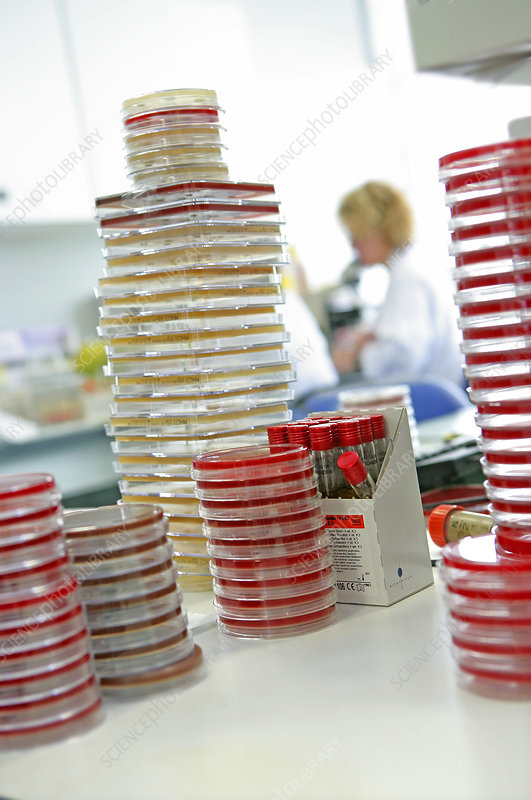 Clinical microbiology lab