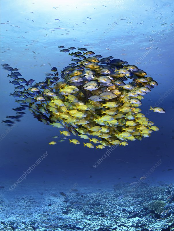 Fish-shaped shoal, conceptual artwork