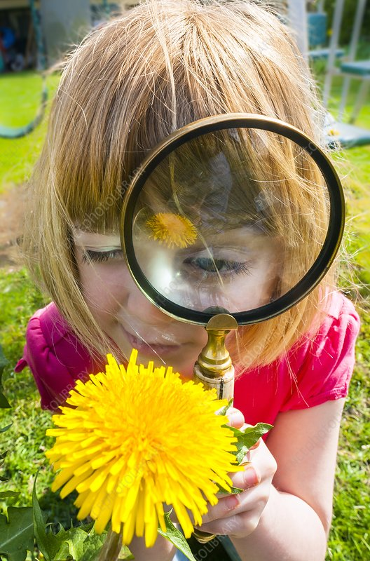 Examining flower with magnifying glass
