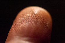 Dermal ridges on fingertip