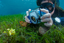 Photographing a juvenile frogfish