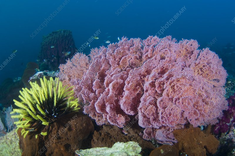 View of healthy reef in Indonesia