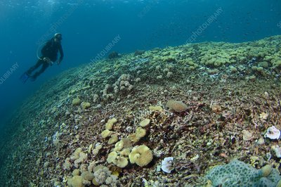 Destroyed reef in Indonesia