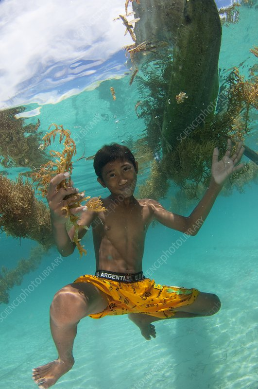 Boy seaweed farming in Indonesia