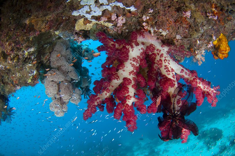 Tree coral growing on overhang
