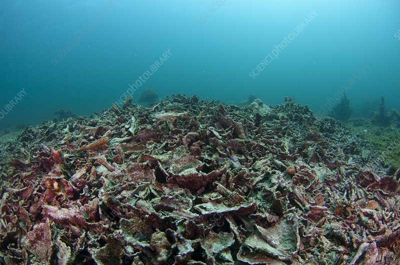 Destroyed reef from fishbombing