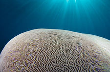 Sunlight streaming over brain coral