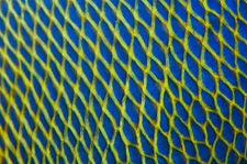Pattern detail of fish scales