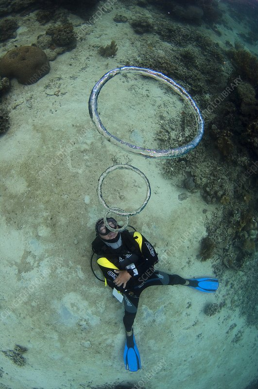 Diver blowing bubble rings