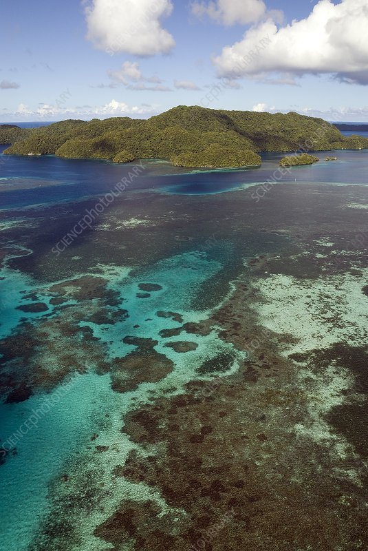Limestone islands and reefs, Palau