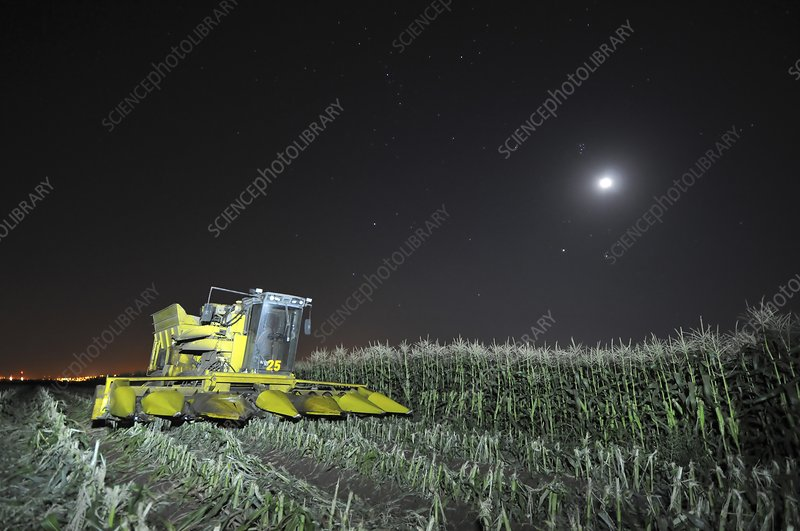 Corn picker in a field