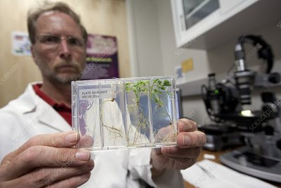 Plant growth in space research