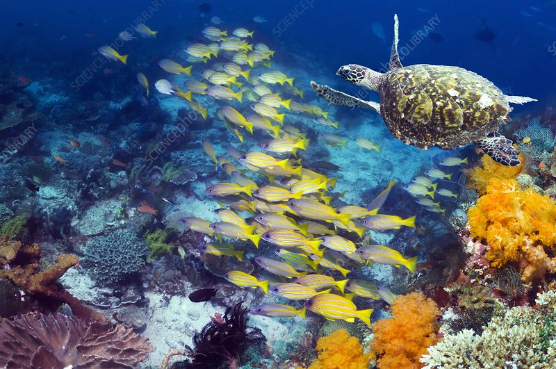Turtle and fish on a reef
