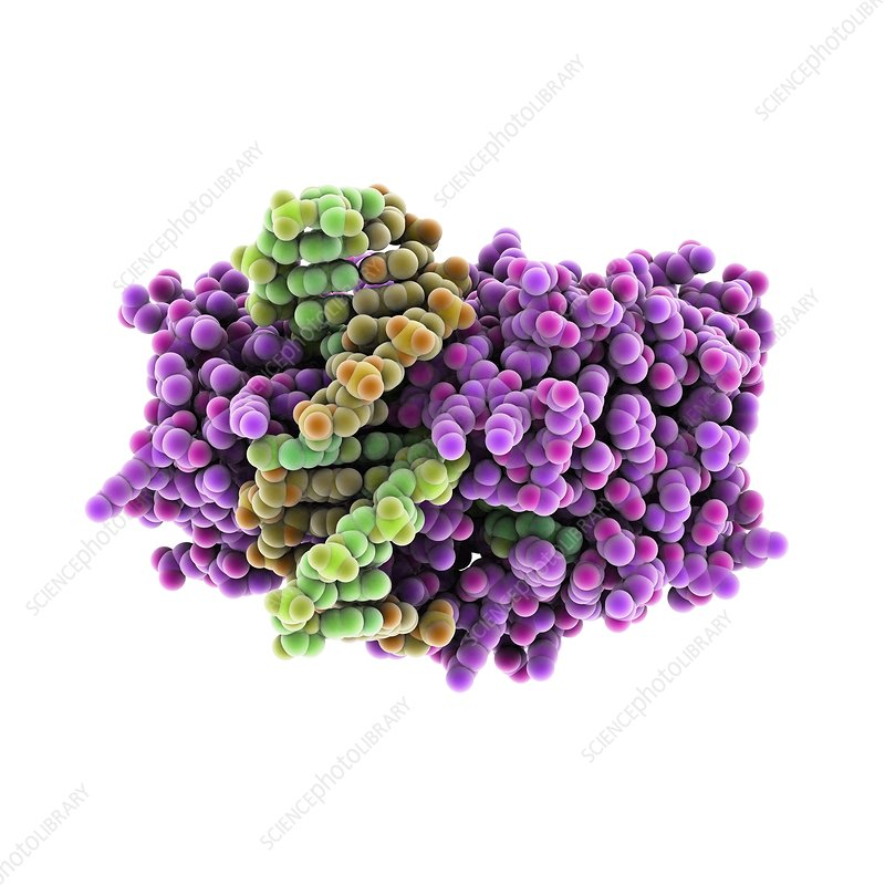 Methyltransferase and DNA