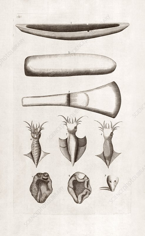 Natural history specimens, 18th century