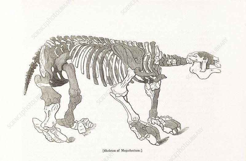 Megatherium skeleton, 19th century