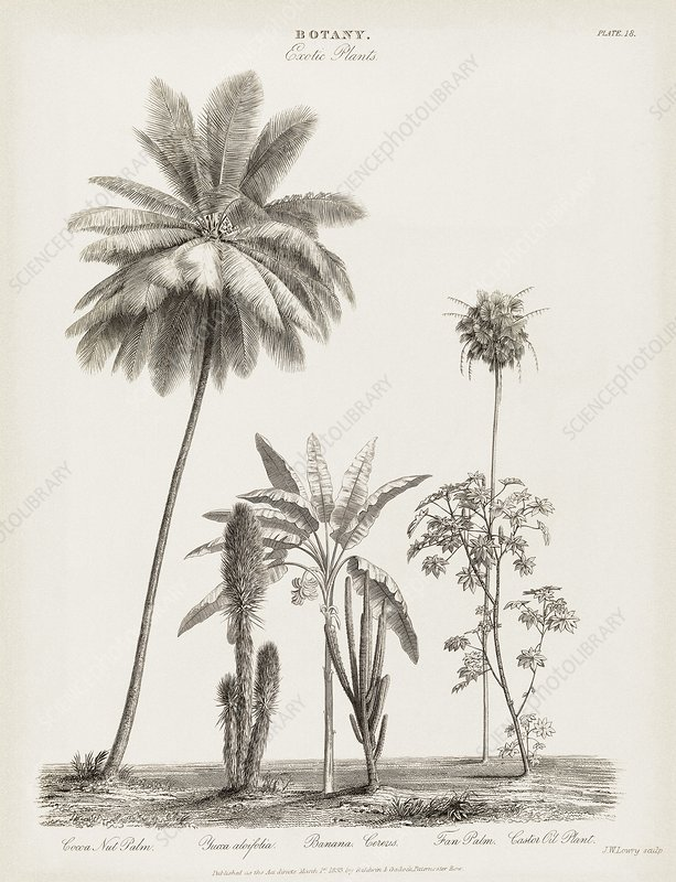 Tropical plants, 19th century
