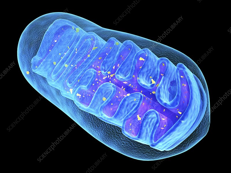 Mitochondrial structure, artwork
