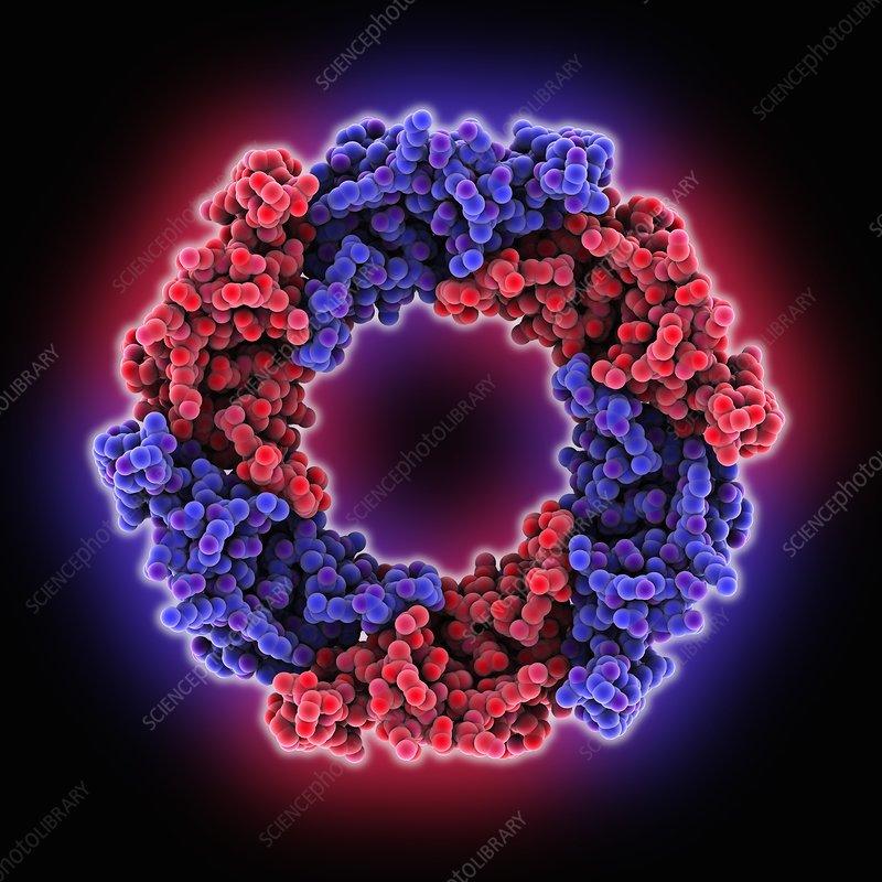 Hemolysin-coregulated protein
